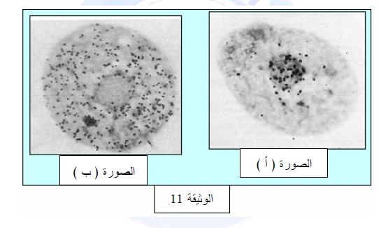 درس تركيب البروتين في مادة العلوم الطبيعية والحياة للسنة الثالثة ثانوي do.php?img=10203