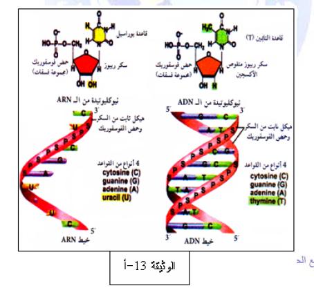درس تركيب البروتين في مادة العلوم الطبيعية والحياة للسنة الثالثة ثانوي do.php?img=10211