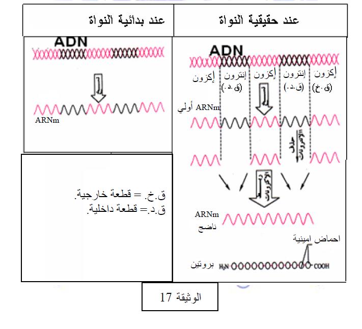 درس تركيب البروتين في مادة العلوم الطبيعية والحياة للسنة الثالثة ثانوي do.php?img=10220